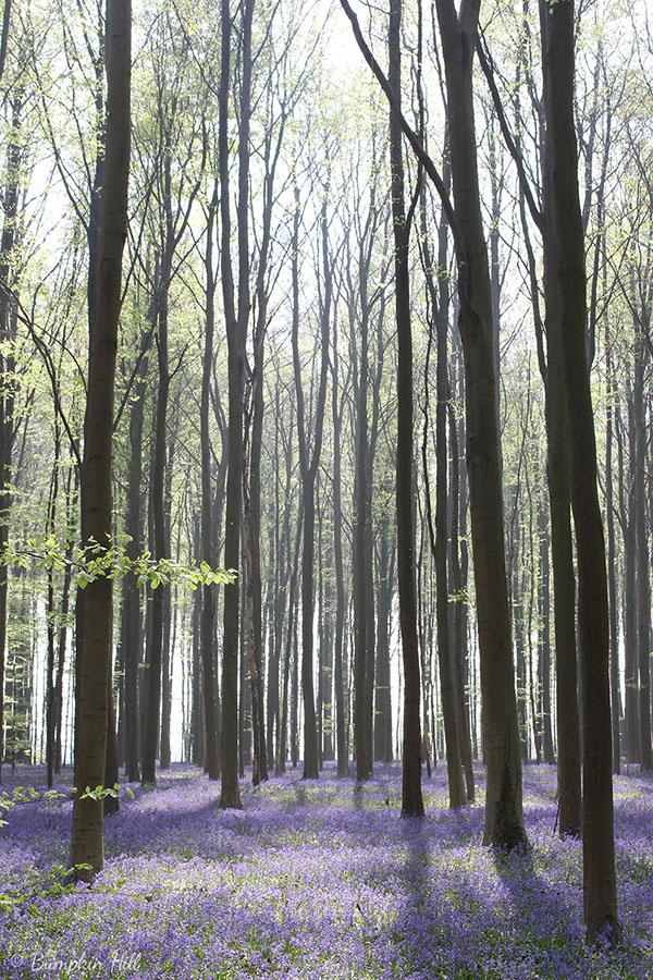 woodland scene - bumpkin hill interview